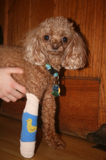 Peanut with Cast Closeup