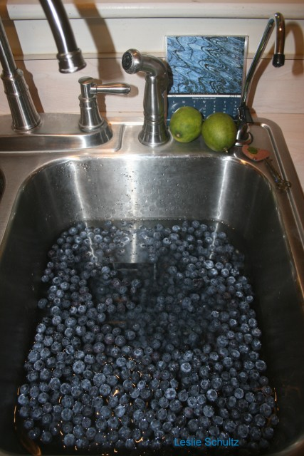 First Step: Freezing and Stewing 20 lbs of Michigan Blueberries