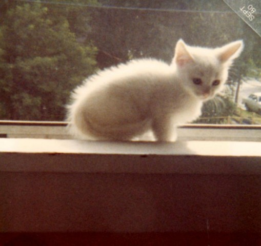 Alpine as a Baby