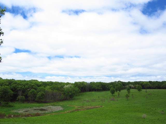 Woods and Wetlands at ICF