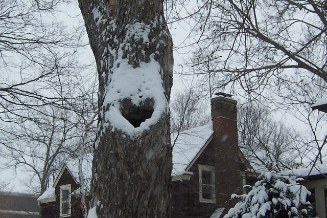 Winter Heart Tree