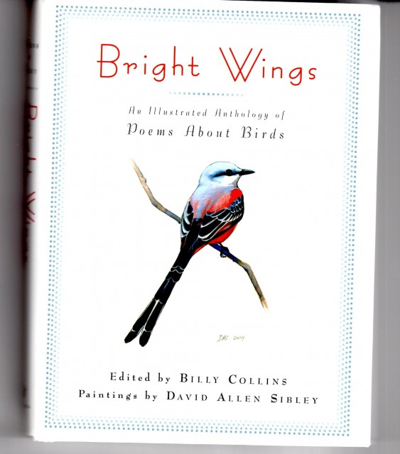 Allure of Birds Bright Wings Copy