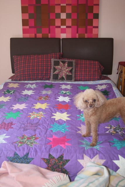 Star Quilt with Peanut