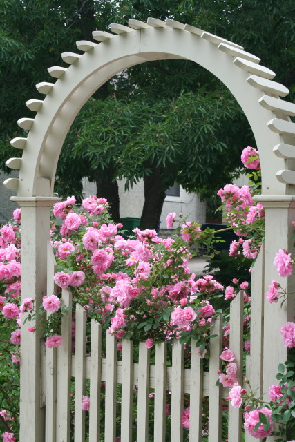 Gate with Roses