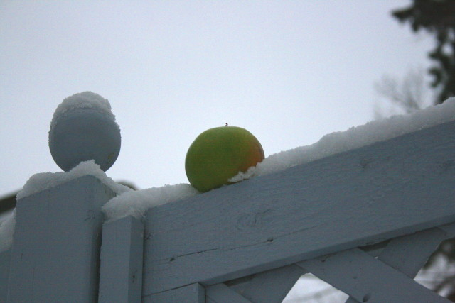 winter-apple